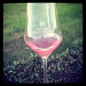 vino rosato grezzo 2013