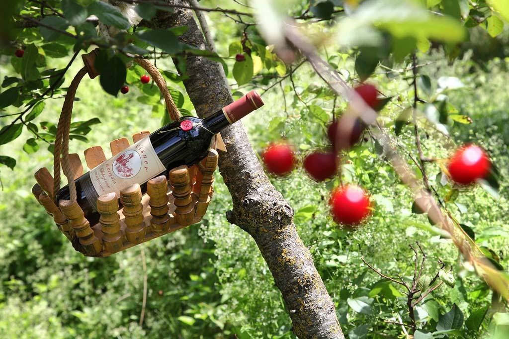 Vendita online Visner, vino di visciole 2016